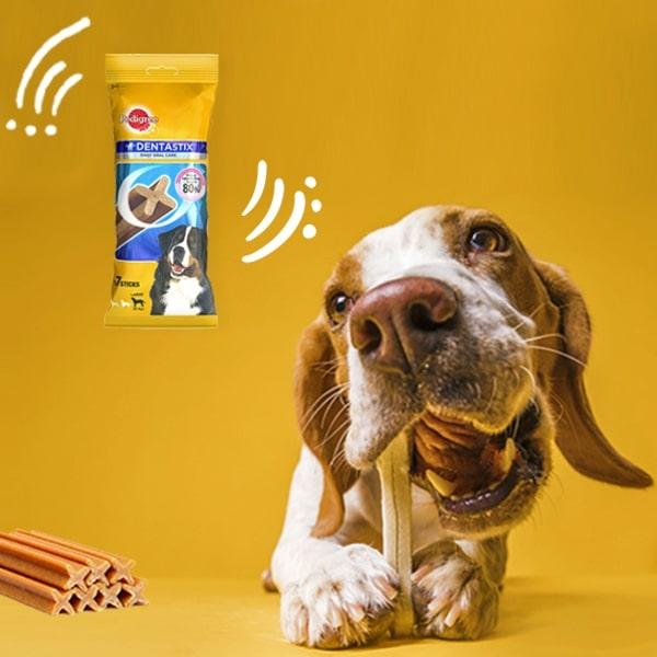 10 snack per cani che il tuo amico a quattro zampe adorerà