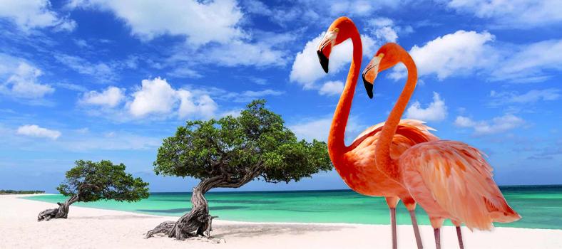 Isola di Aruba: La perla sconosciuta dei Caraibi